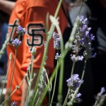Spotlight on San Francisco Giants' Garden at AT&T Park