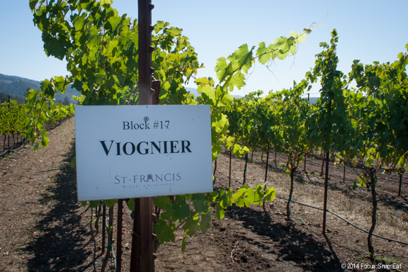 A row of viognier vines