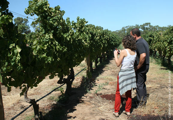 Inspecting the verdelho vines at Mandoon Estate