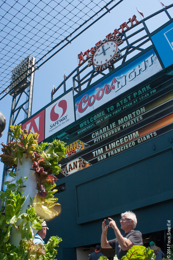 The garden is right under the Giants' scoreboard at centerfield.